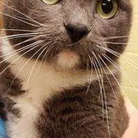Adopt A Pet :: LittleBit2 - Staley, NC
