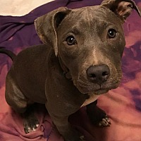 Adopt A Pet :: Lucy - Hartford, CT