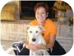 Labrador Retriever Mix Dog for adoption in Plainfield, Illinois - Boo