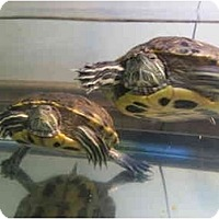 Adopt A Pet :: Jeff & Corry - Baltimore, MD