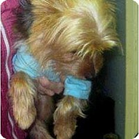 Adopt A Pet :: Biscuit - Conroe, TX