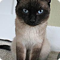 Adopt A Pet :: Egypt - Grand Rapids, MI