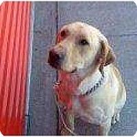 Adopt A Pet :: Starbuck - Alliance, NE