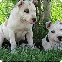 Adopt A Pet :: Gilroy Puppies - Bakersfield, CA