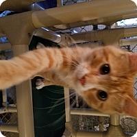 Adopt A Pet :: Usain - Geneseo, IL