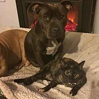 Adopt A Pet :: Kiara (LOVES dogs!) - Corona, CA