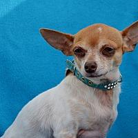 Adopt A Pet :: Nina - Pittsburgh, PA