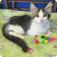 Adopt A Pet :: Jaden - Glendale, AZ