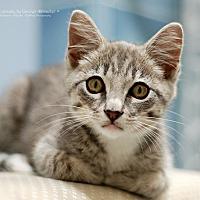 Adopt A Pet :: Geo - San Carlos, CA