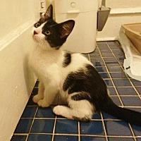 Adopt A Pet :: Larry - Philadelphia, PA