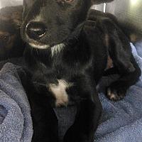 Adopt A Pet :: Babs - Birmingham, AL