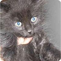 Adopt A Pet :: Mic - Davis, CA