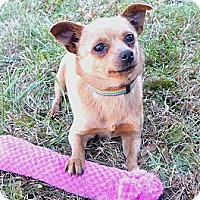 Adopt A Pet :: Cleo - Mocksville, NC
