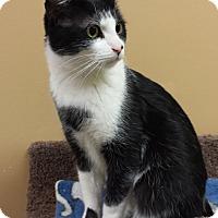 Adopt A Pet :: Klondike - St. Louis, MO