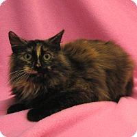 Adopt A Pet :: Chyna - Redwood Falls, MN