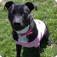 Adopt A Pet :: Darci - Janesville, WI