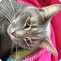 Adopt A Pet :: Leonardo - Raritan, NJ