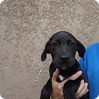 Adopt A Pet :: Reno - Oviedo, FL