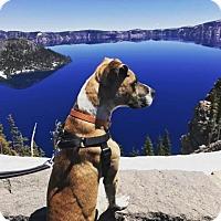 Adopt A Pet :: Chance - Pleasant Hill, CA