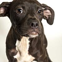 Adopt A Pet :: Daisey - Baton Rouge, LA