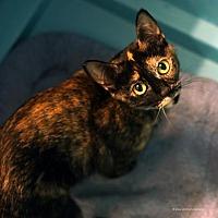 Adopt A Pet :: Ofglen - Tucson, AZ