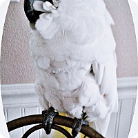 Adopt A Pet :: Mahi - Tampa, FL
