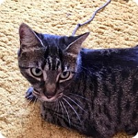 Adopt A Pet :: Tinky -Adoption Pending! - Colmar, PA