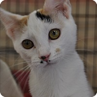 Adopt A Pet :: Ariel - La Canada Flintridge, CA