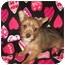 Photo 3 - Yorkie, Yorkshire Terrier/Pomeranian Mix Puppy for adoption in Wauseon, Ohio - Destiny