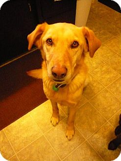 Labrador Retriever Mix Dog for adoption in Saskatoon, Saskatchewan - Tucker