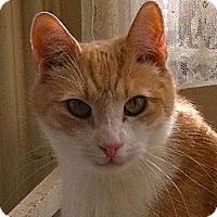 Adopt A Pet :: Noah - Jersey City, NJ