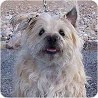 Adopt A Pet :: Muffin - Las Vegas, NV