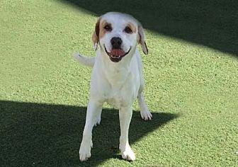 Beagle/Hound (Unknown Type) Mix Dog for adoption in Irvine, California - Jake