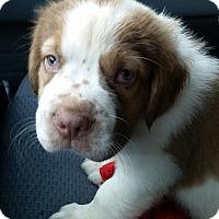 Adopt A Pet :: Ducky - Gainesville, FL