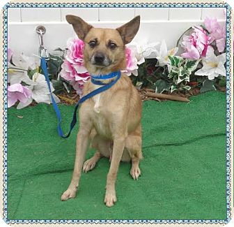 Terrier (Unknown Type, Small) Mix Dog for adoption in Marietta, Georgia - SCAMP (R)