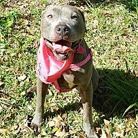 Adopt A Pet :: Stella - Orlando, FL