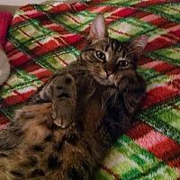 Adopt A Pet :: Sheba^ - Glen cove, NY