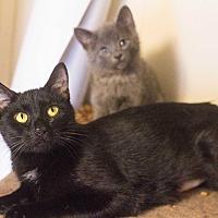 Adopt A Pet :: Mary - Morgantown, WV