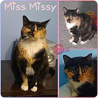 Adopt A Pet :: Miss Missy - Jeffersonville, IN