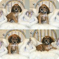 Adopt A Pet :: Sunday 💟 ADOPTED! - Saratoga Springs, NY