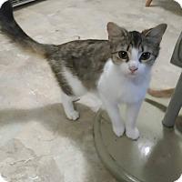Adopt A Pet :: Sharah - Old Town, FL