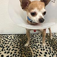 Adopt A Pet :: Winky - Las Vegas, NV