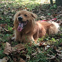 Adopt A Pet :: Joey, Too - Capon Bridge, WV
