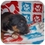 Photo 3 - Shepherd (Unknown Type)/Rottweiler Mix Puppy for adoption in Westminster, Colorado - Tegin