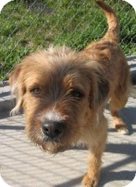 Terrier (Unknown Type, Medium) Mix Dog for adoption in Philadelphia, Pennsylvania - Tucker