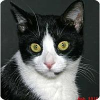 Adopt A Pet :: ELIZABETH - Encino, CA