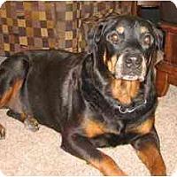 Adopt A Pet :: Griz - Courtesy Post - Scottsdale, AZ