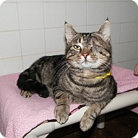 Adopt A Pet :: Tiger - Dover, OH