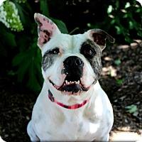 Adopt A Pet :: Cleo - Mount Juliet, TN