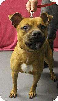 Pit Bull Terrier Mix Dog for adoption in Delaware, Ohio - Henry